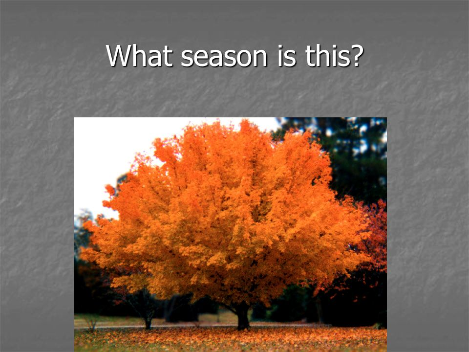 What season is this