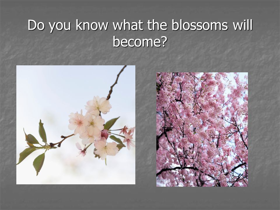 Do you know what the blossoms will become