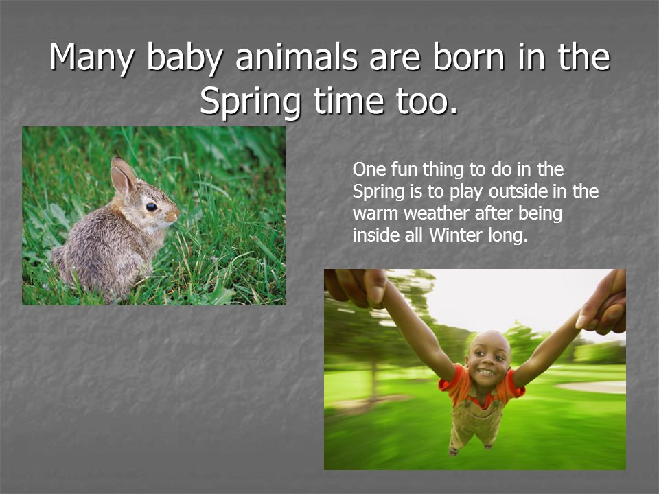 Many baby animals are born in the Spring time too.
