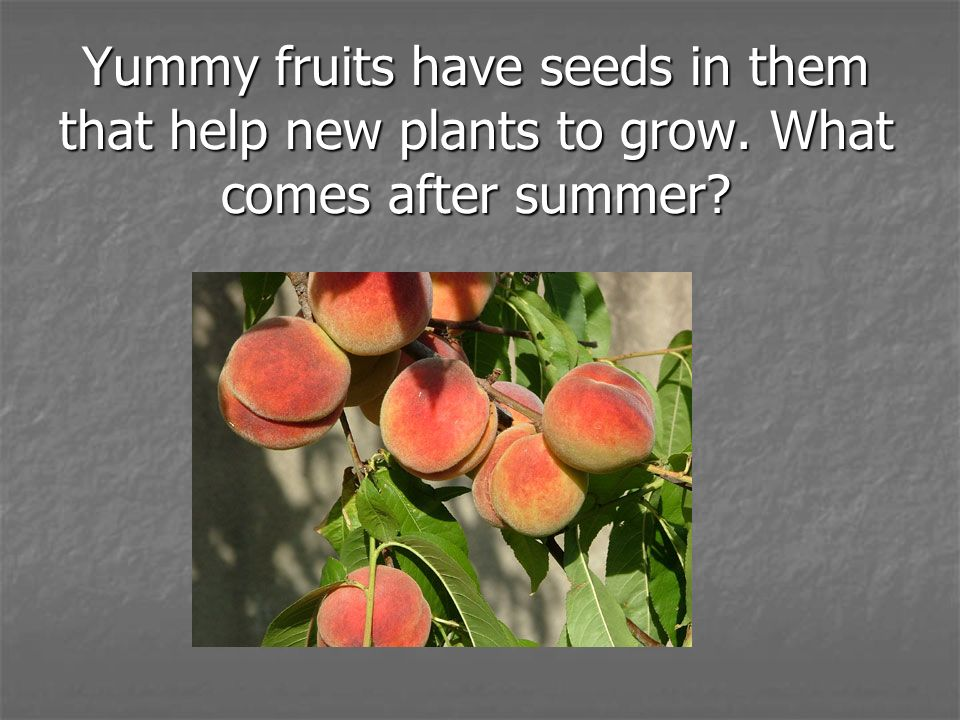Yummy fruits have seeds in them that help new plants to grow
