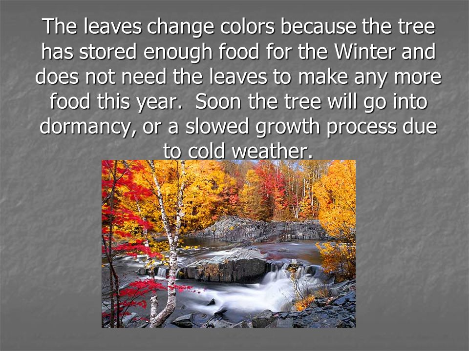The leaves change colors because the tree has stored enough food for the Winter and does not need the leaves to make any more food this year.