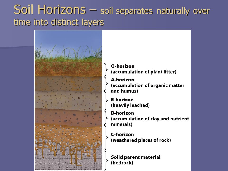 Chapter 15 soil resources ppt video online download for Soil horizons layers