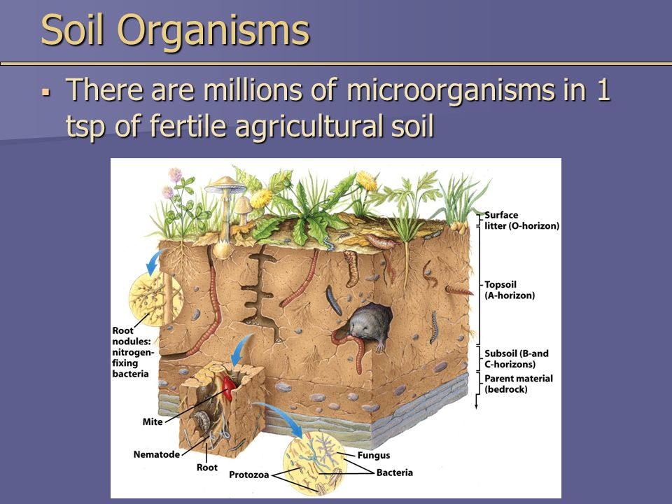 Chapter 15 soil resources ppt video online download for Soil organisms