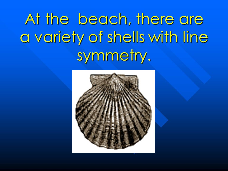 At the beach, there are a variety of shells with line symmetry.