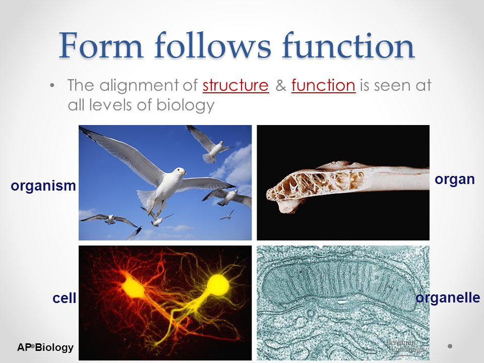 AP Biology AP BIOLOGY BIG IDEAS. - ppt download