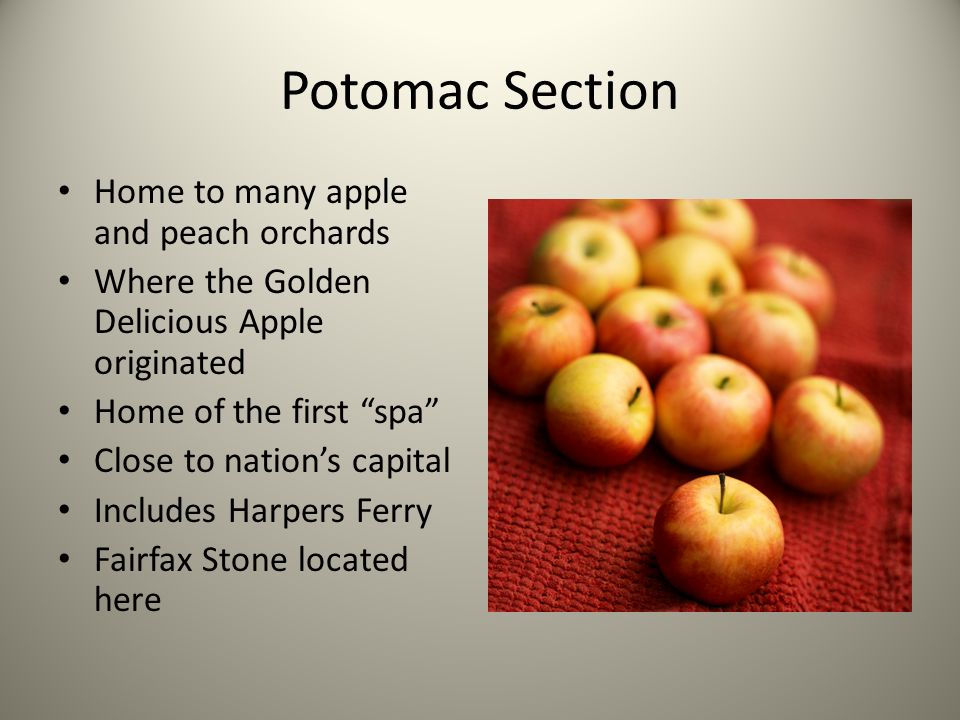 Potomac Section Home to many apple and peach orchards
