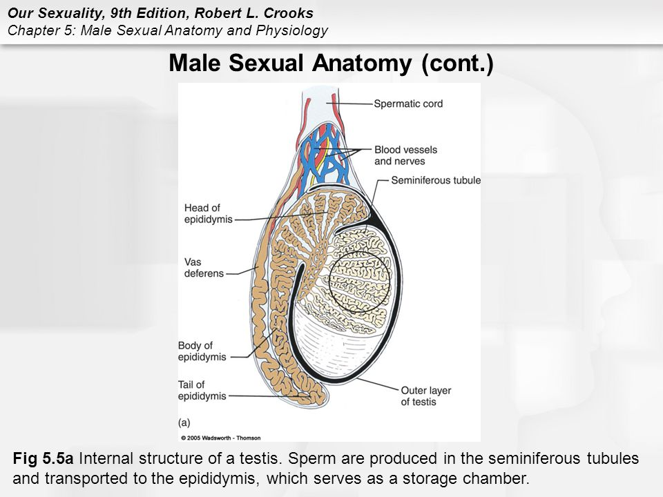 Anatomy Sexual 69