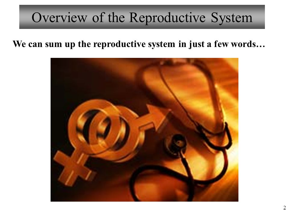 an overview of the male reproductive system The reproductive system the reproductive system overview the reproductive system is a collection of organs and a network of.