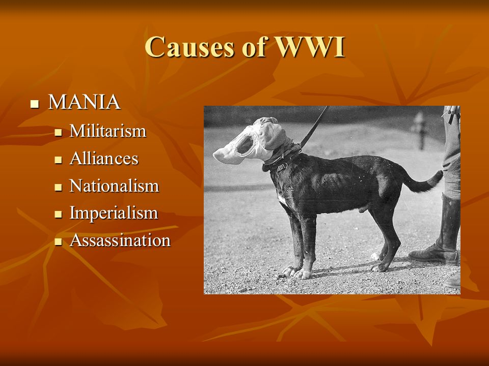 Causes of WWI MANIA Militarism Alliances Nationalism Imperialism