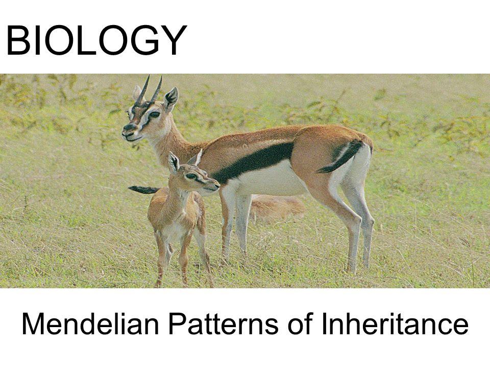 Mendelian Patterns of Inheritance