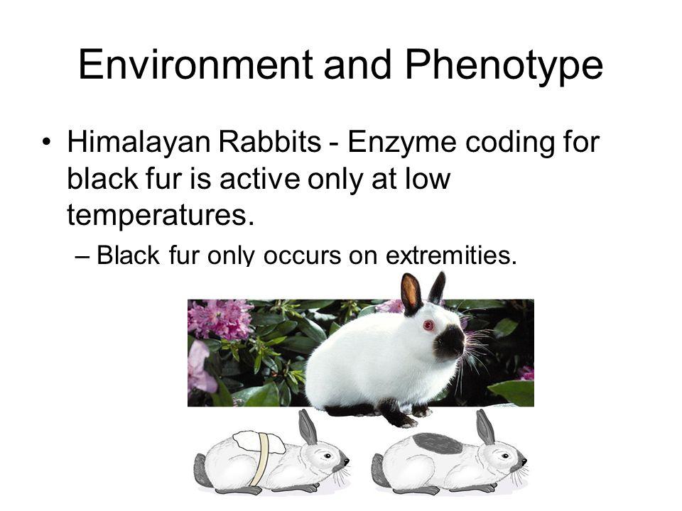 Environment and Phenotype