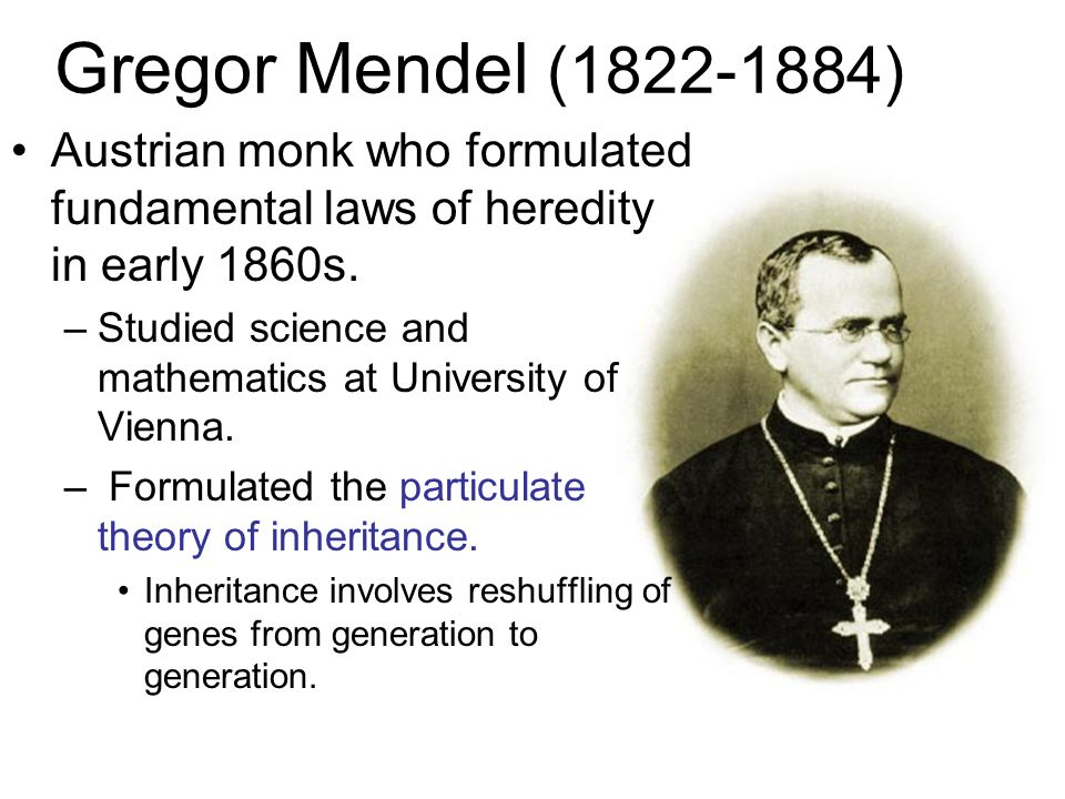 Gregor Mendel (1822-1884) Austrian monk who formulated fundamental laws of heredity in early 1860s.