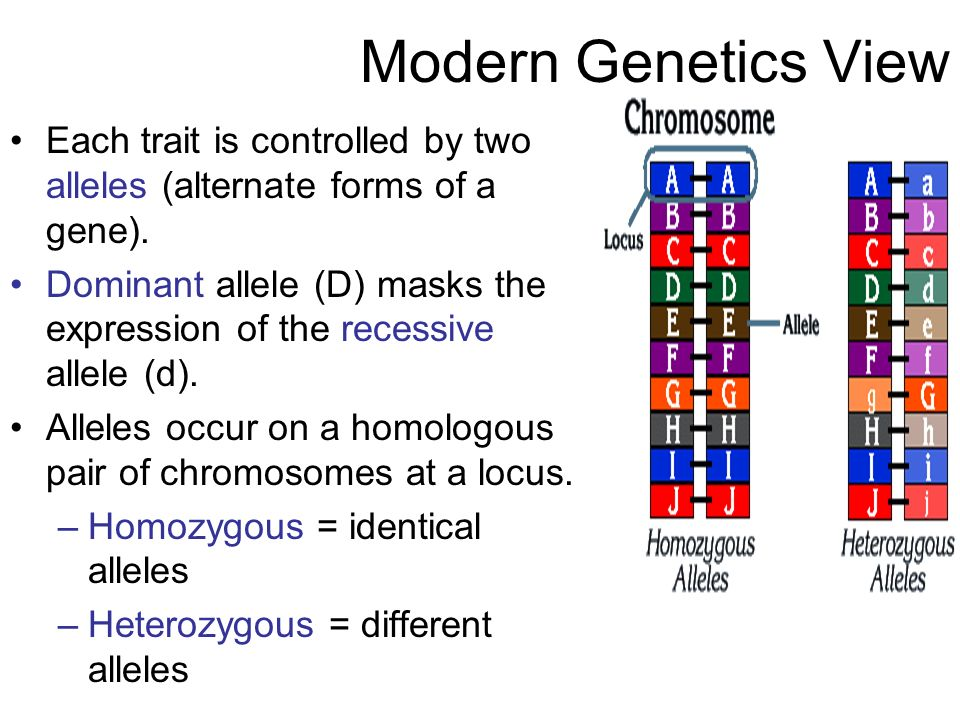 Modern Genetics View Each trait is controlled by two alleles (alternate forms of a gene).