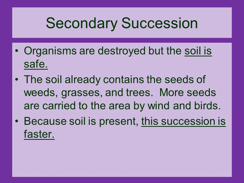 Ecological Succession ppt video online download – Primary and Secondary Succession Worksheet