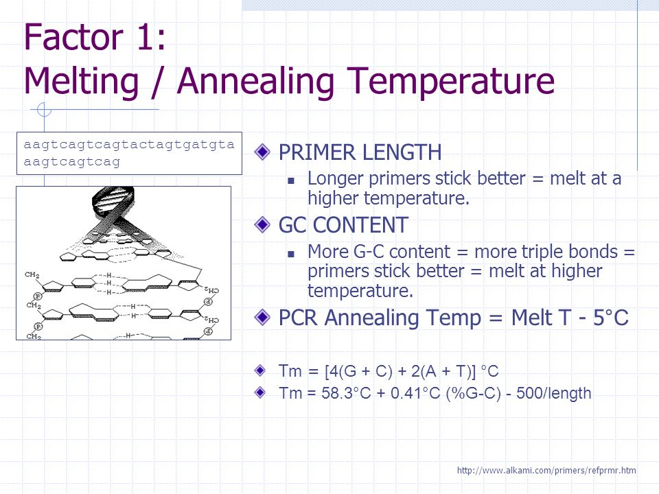 Primer melting temperature