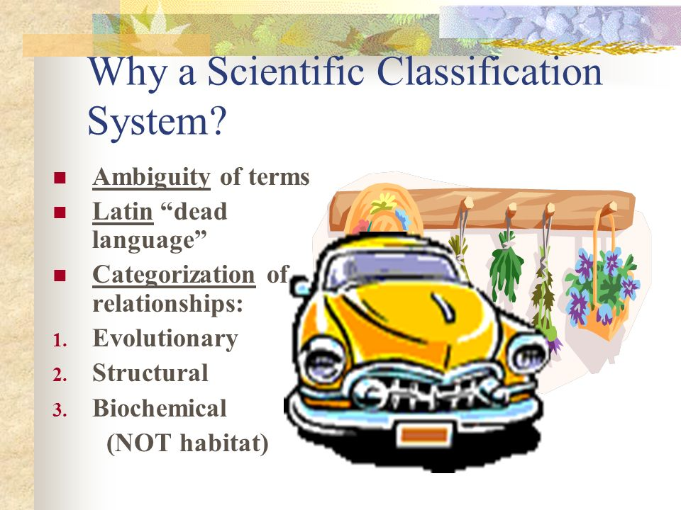 Why a Scientific Classification System