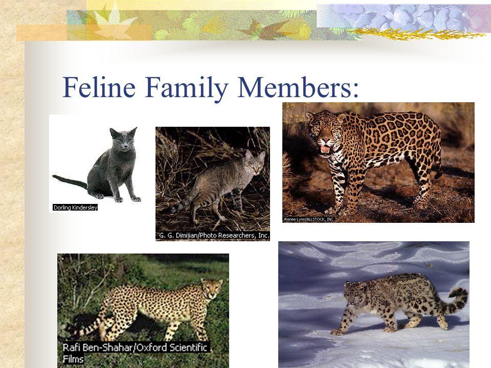 Feline Family Members: