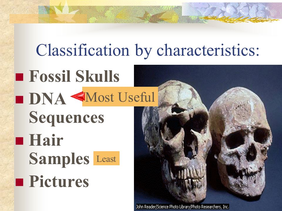 Classification by characteristics: