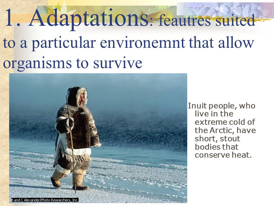 1. Adaptations: feautres suited to a particular environemnt that allow organisms to survive