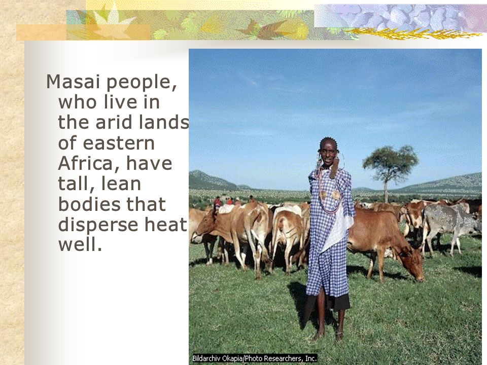 Masai people, who live in the arid lands of eastern Africa, have tall, lean bodies that disperse heat well.