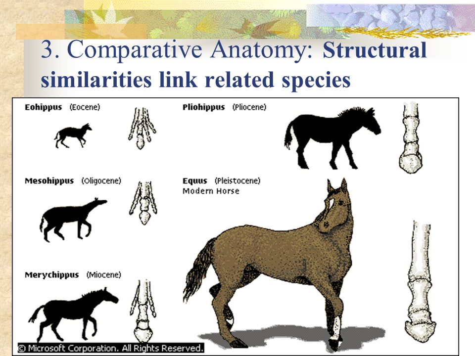 3. Comparative Anatomy: Structural similarities link related species