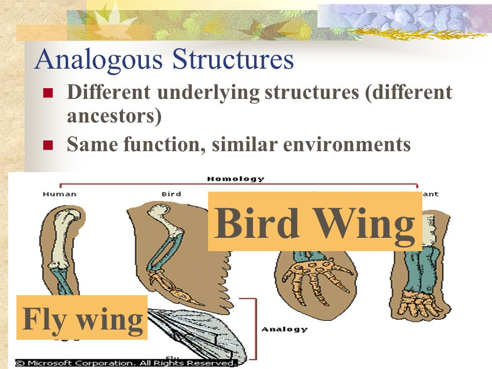 Bird Wing Fly wing Analogous Structures