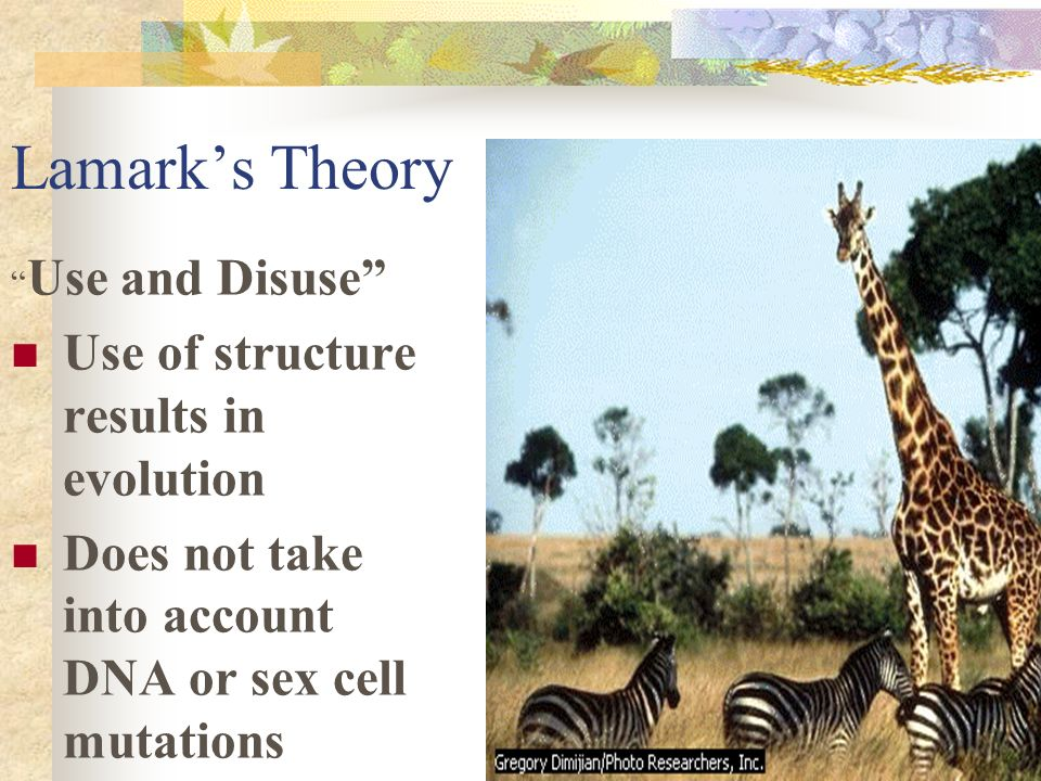 Lamark's Theory Use of structure results in evolution