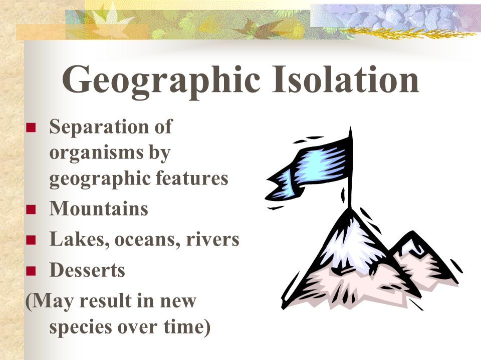 Geographic Isolation Separation of organisms by geographic features