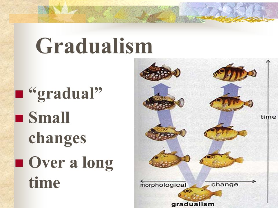 Gradualism gradual Small changes Over a long time