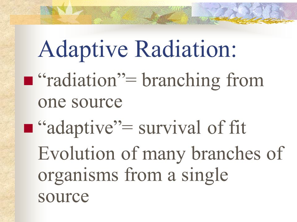 Adaptive Radiation: radiation = branching from one source