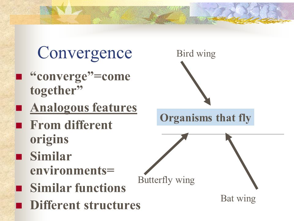 Convergence converge =come together Analogous features