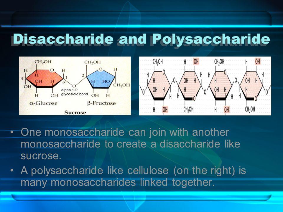 Disaccharide and Polysaccharide