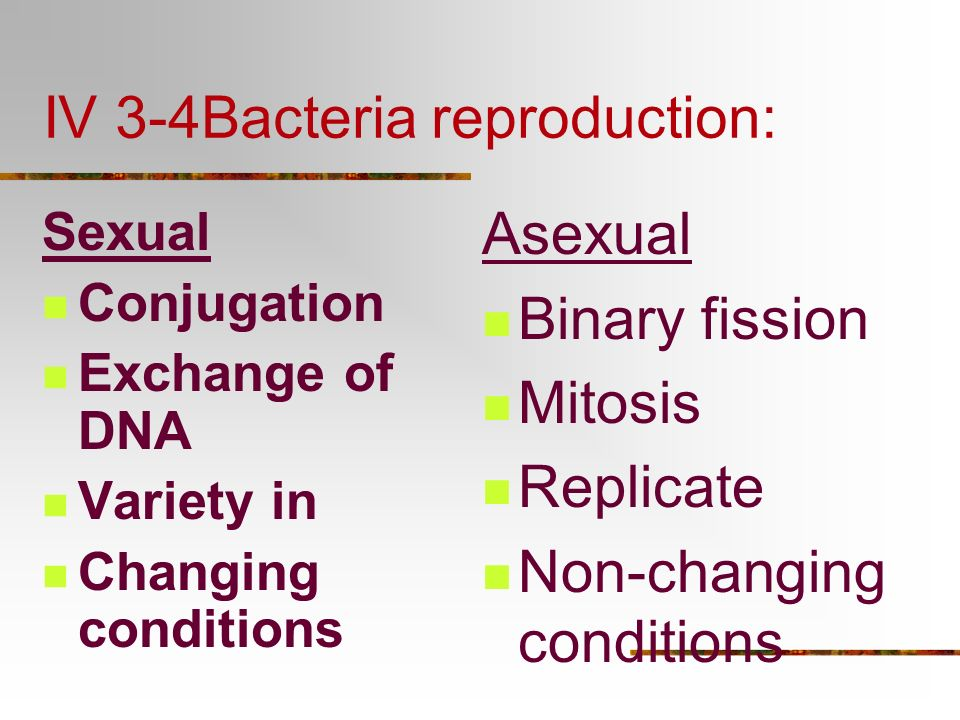 IV 3-4Bacteria reproduction: