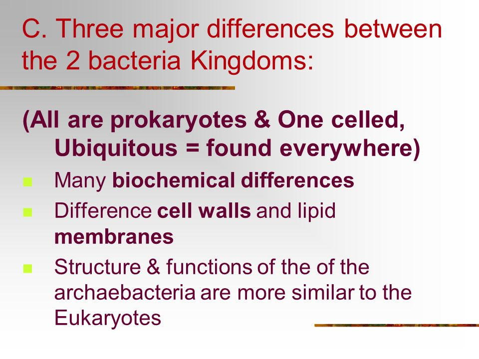 C. Three major differences between the 2 bacteria Kingdoms: