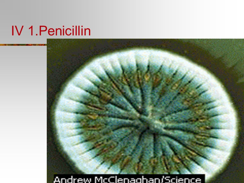 IV 1.Penicillin