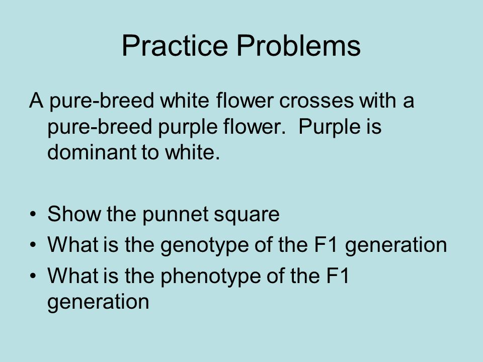 Practice Problems A pure-breed white flower crosses with a pure-breed purple flower. Purple is dominant to white.