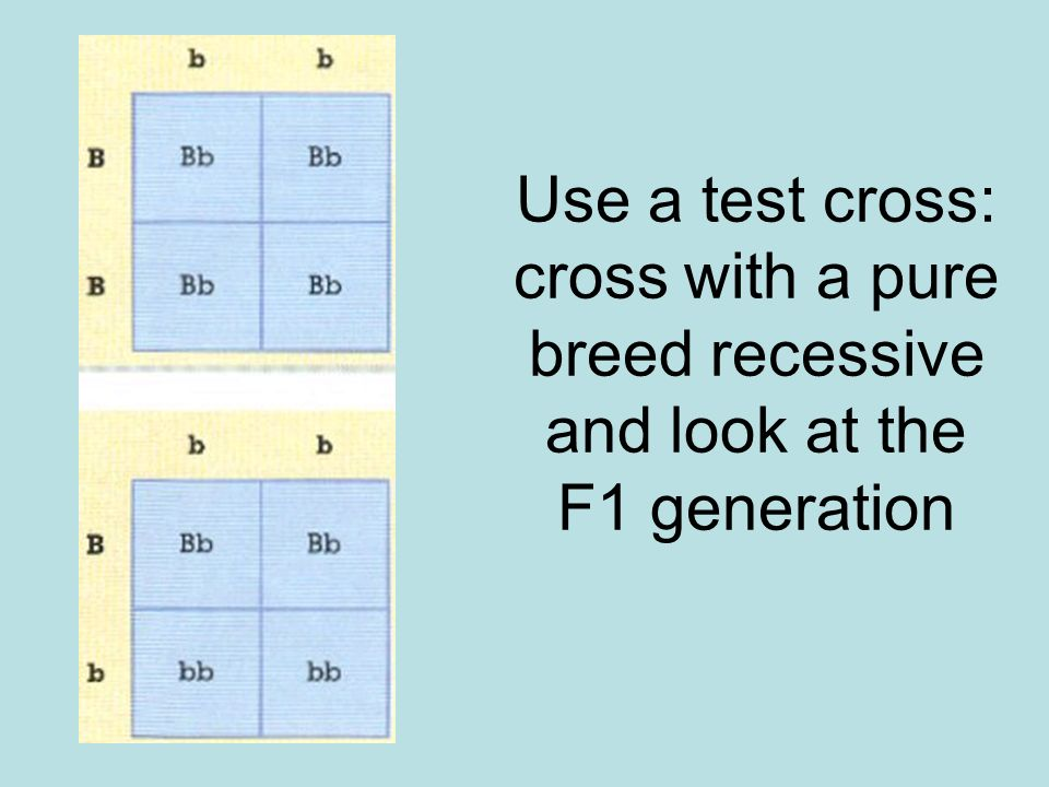 Use a test cross: cross with a pure breed recessive and look at the F1 generation