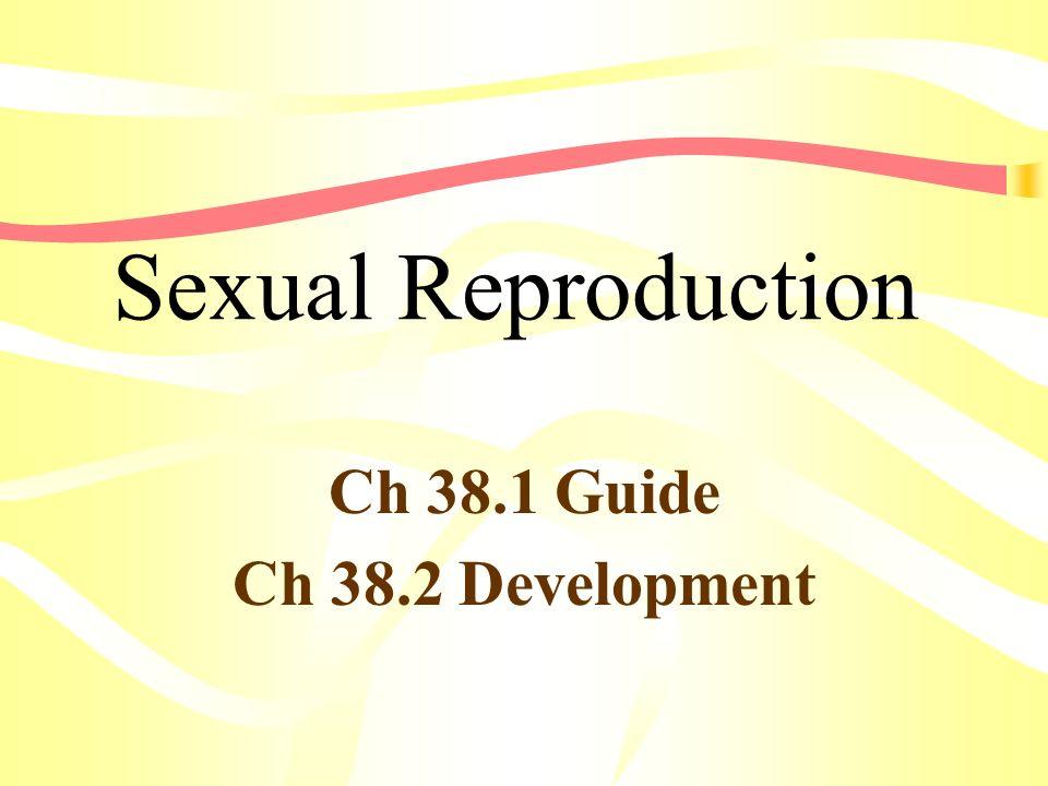 Ch 38.1 Guide Ch 38.2 Development