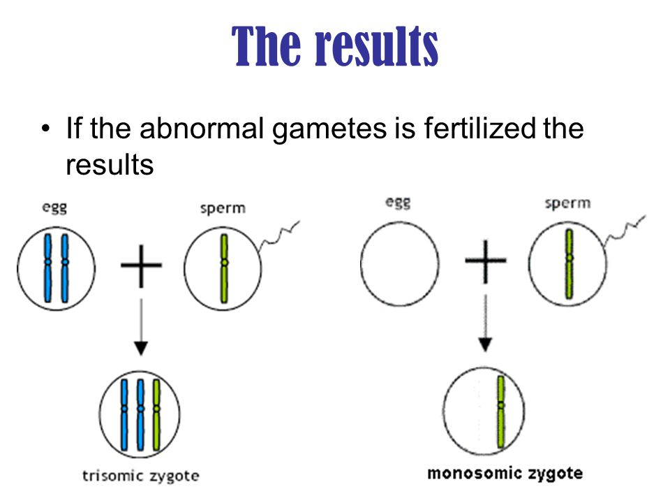 The results If the abnormal gametes is fertilized the results