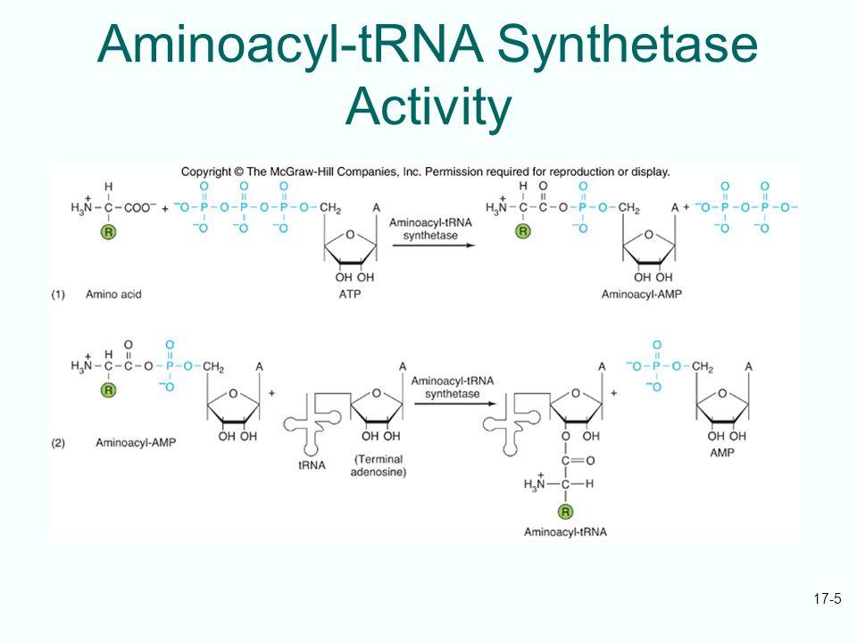 aminoacyl trna synthetase - photo #24