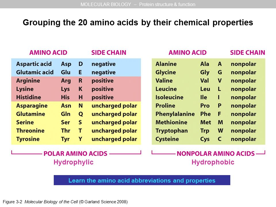 Amino acid abbreviations