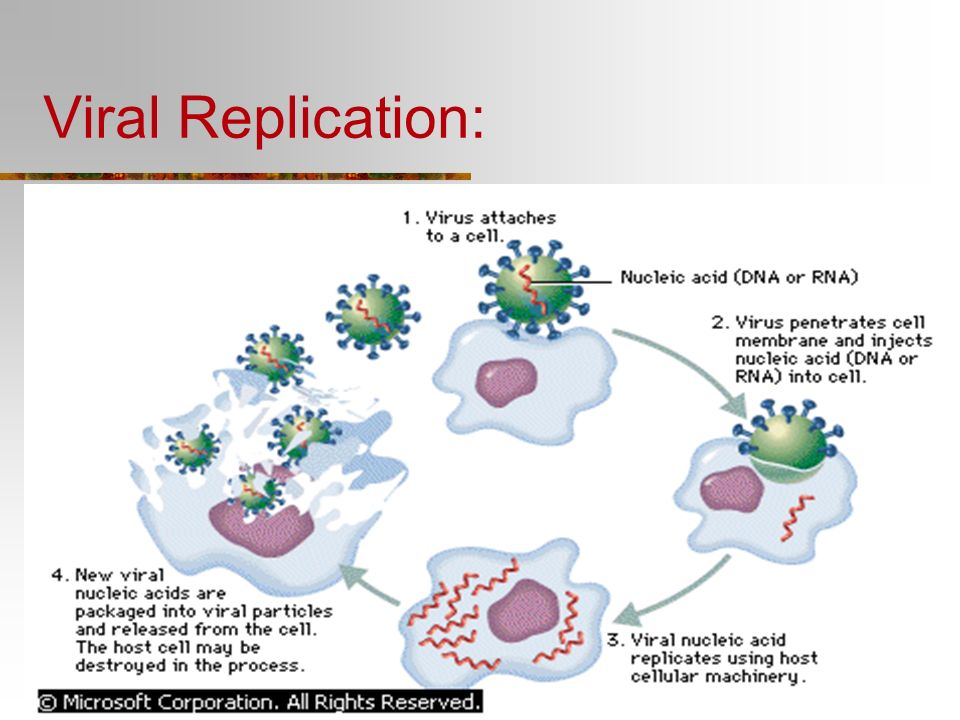 Viral Replication: