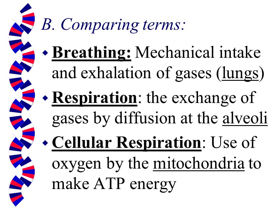 B. Comparing terms: Breathing: Mechanical intake and exhalation of gases (lungs) Respiration: the exchange of gases by diffusion at the alveoli.