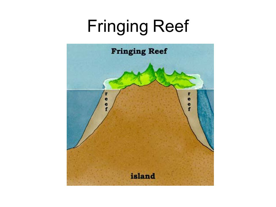 Fringing Reef
