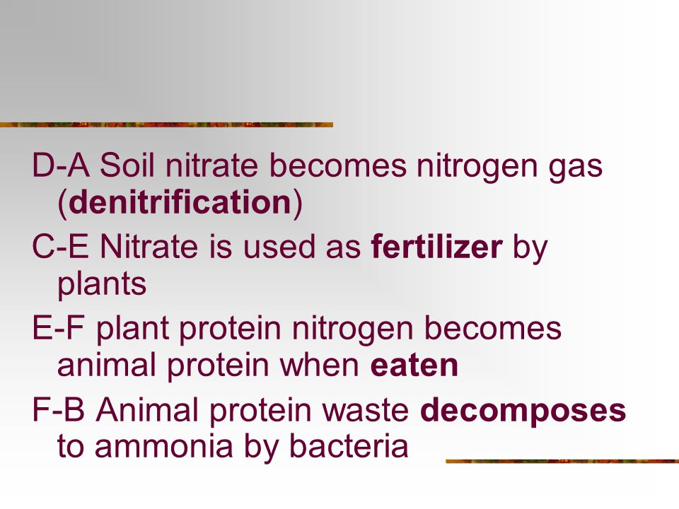 D-A Soil nitrate becomes nitrogen gas (denitrification)