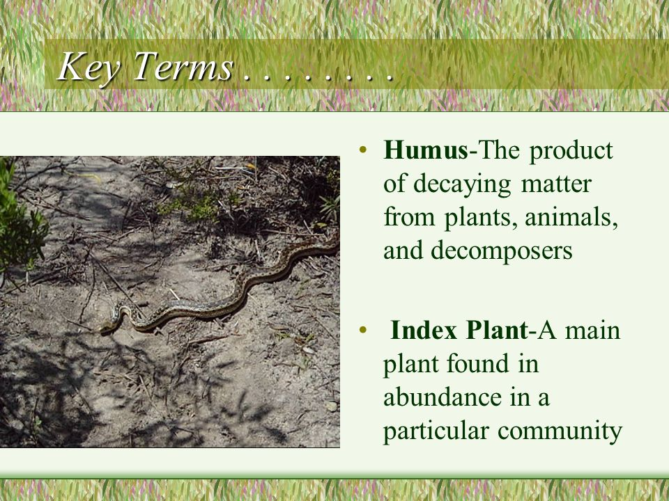 Key Terms . . . . . . . . Humus-The product of decaying matter from plants, animals, and decomposers.