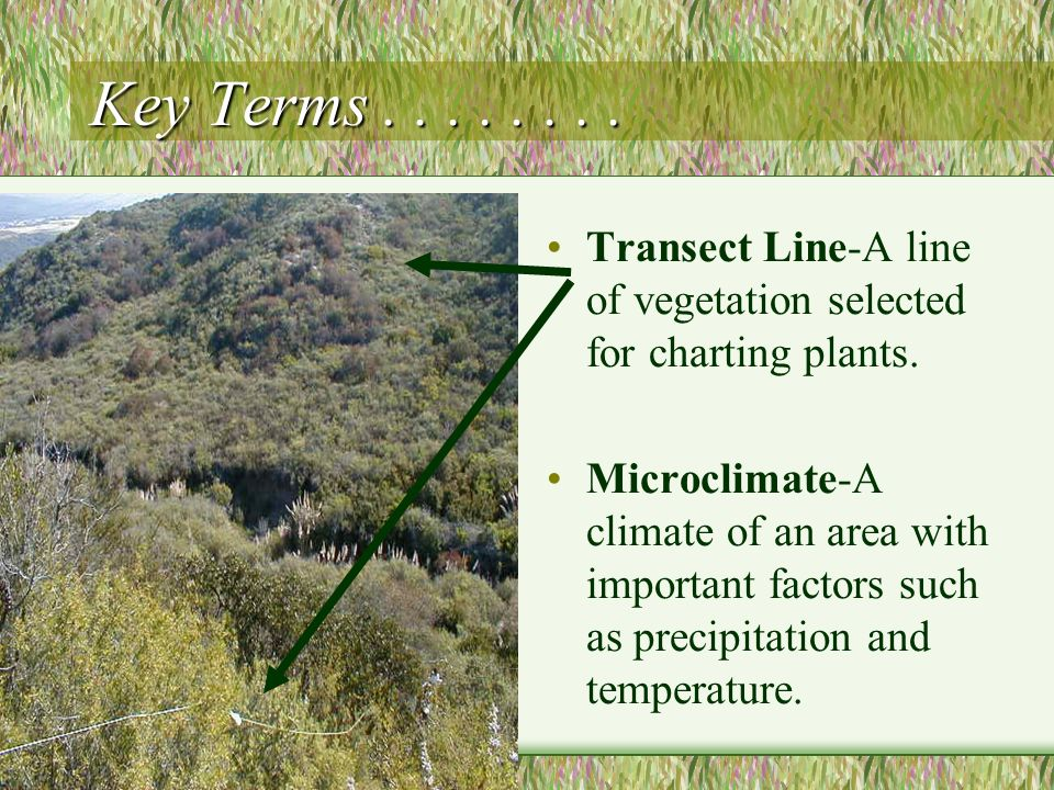 Key Terms Transect Line-A line of vegetation selected for charting plants.