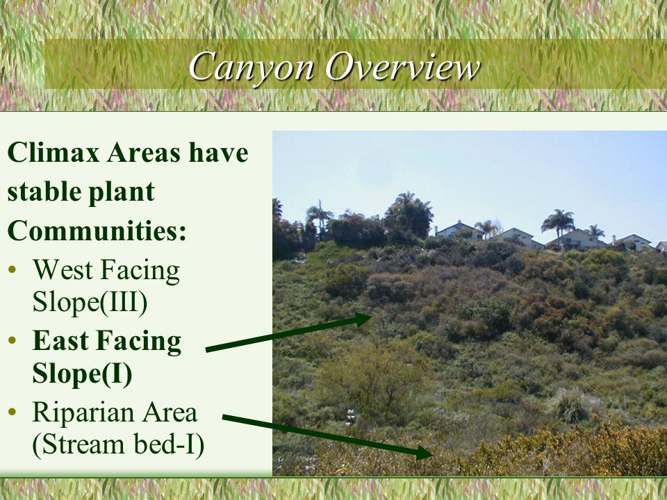 Canyon Overview Climax Areas have stable plant Communities: