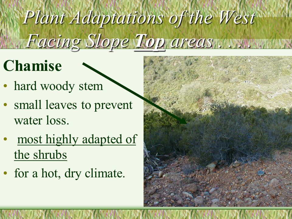 Plant Adaptations of the West Facing Slope Top areas