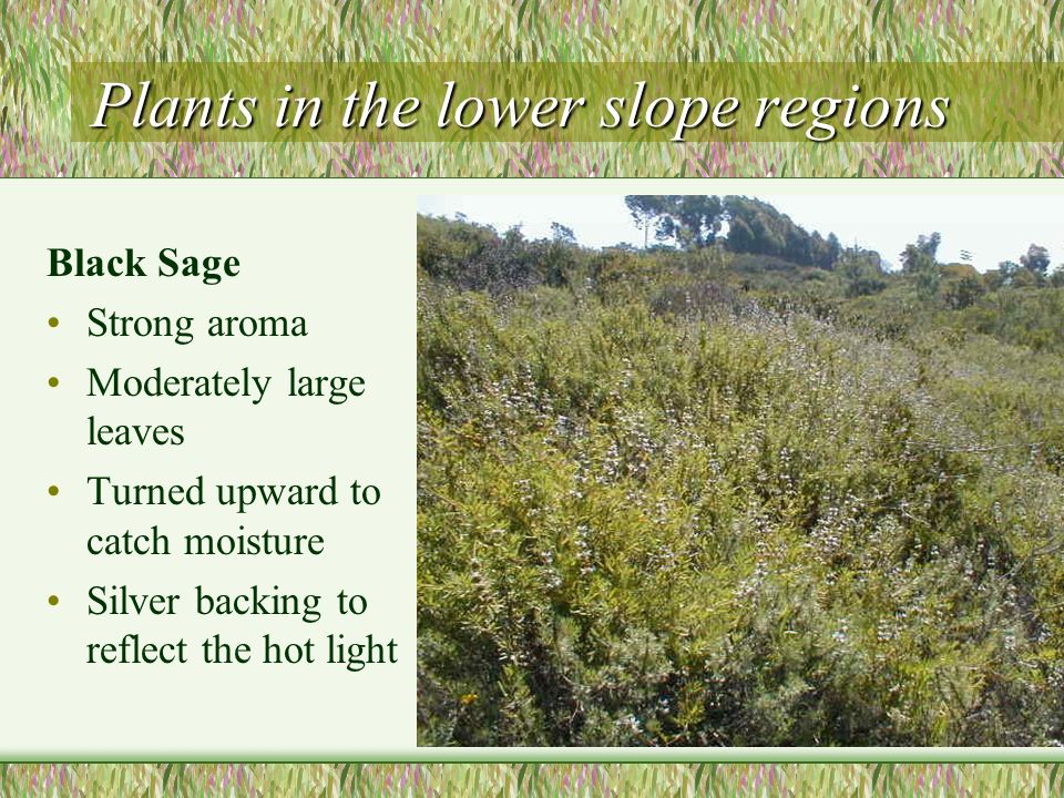 Plants in the lower slope regions